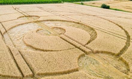 Il mistero dei Cerchi nel grano – ADRIANO FORGIONE – Ricercatore